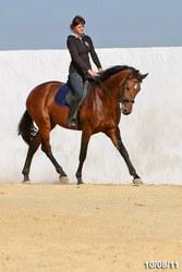 лошадь на продажу,  жеребчик МОЛИБДЕН 2009г.р.