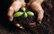 Органическое сапропелевое удобрение