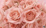 Розы. Все цвета радуги