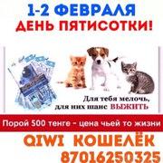 Приют для кошек нуждается в помощи!!!