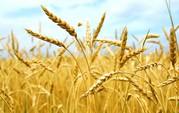 Продам сельское хозяйство в Ерейментауском районе
